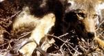 NON, plus de fourrure animale - OUI à la fourrure synthétique